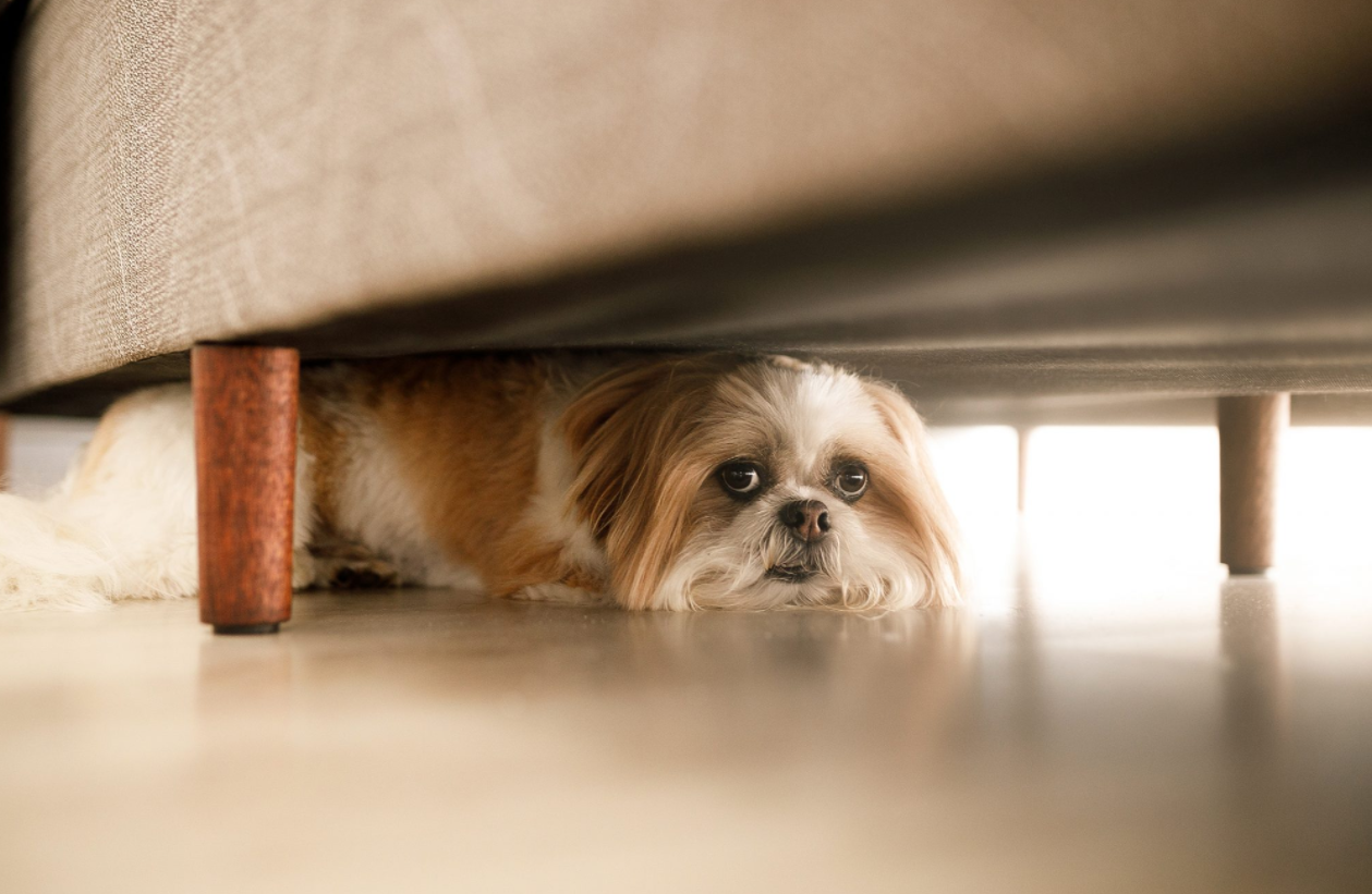 Why Are Dogs Scared of Fireworks? 4 Ways to Help Your Pup Cope